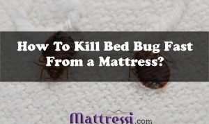 how-to-kill-bed-bugs-fast