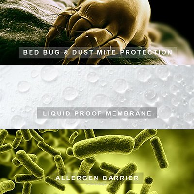 Resistant to Dust Mites and Allergens